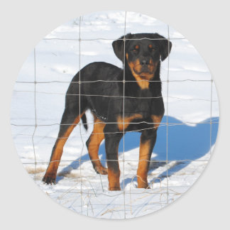 Lobo Rottweiler Classic Round Sticker