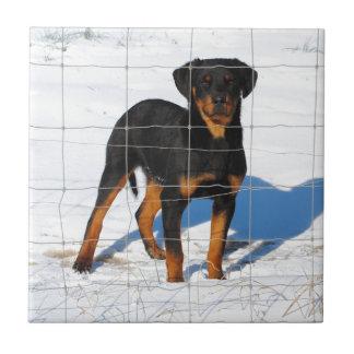 Lobo Rottweiler Tile