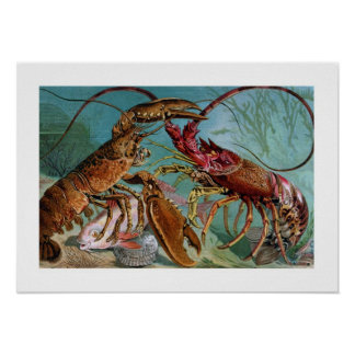 Lobster and Langoustine Poster