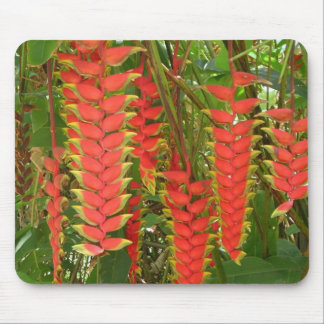 Lobster Claw Heliconia Mouse Pad