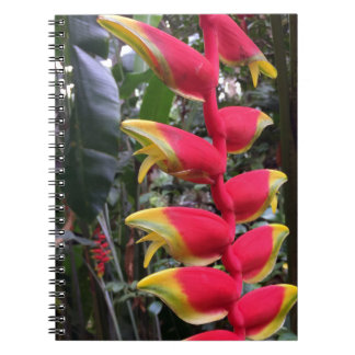 Lobster Claw Notebook