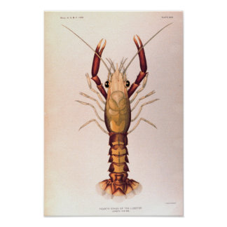 Lobster in the Fourth Stage Poster