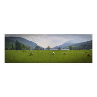 Loch Oich Sheep Photo Print