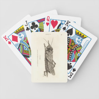 Locust print bicycle playing cards