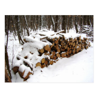Log Pile in the Woods Postcard