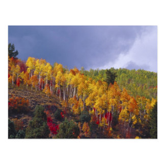 Logan Canyon in Utah in autumn with passing Postcard