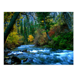 Logan Canyon River Postcard