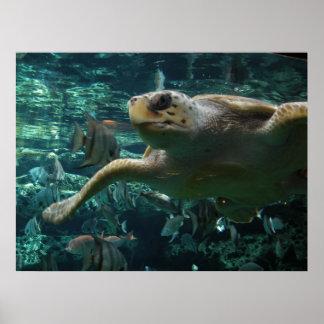 Logger Head Sea Turtle Poster