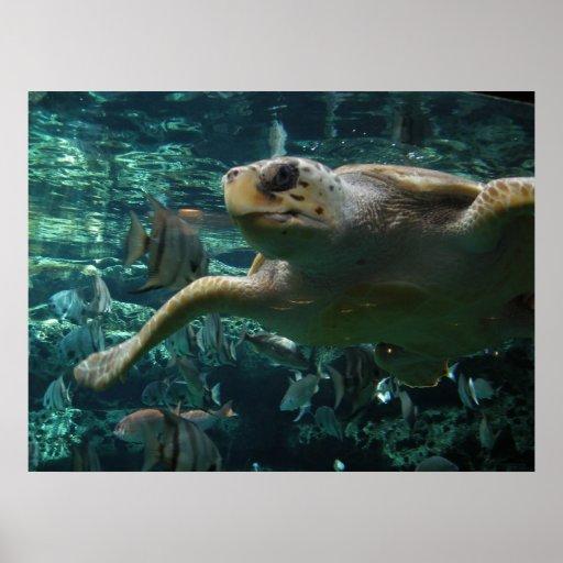 Logger Head Sea Turtle Posters