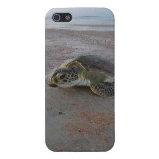 Loggerhead Sea Turtle iPhone 5 Covers