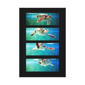 Loggerhead Sea Turtle Study Wrapped Canvas Gallery Wrap Canvas