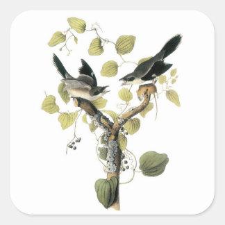 Loggerhead Shrike by Audubon Square Sticker