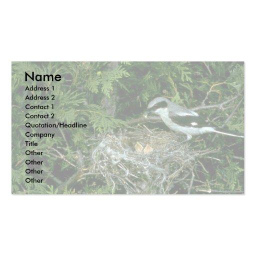 Loggerhead Shrike feeding young Business Card