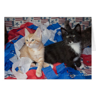 Loki & His Brother in Red, White, & Blue Note Card