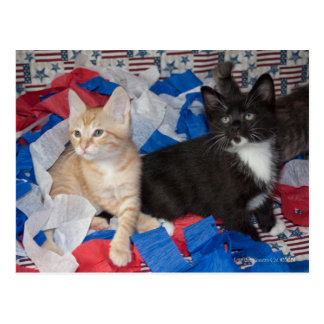 Loki & His Brother in Red, White, & Blue Postcard