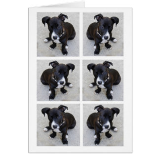 Loki Pup Collage Card