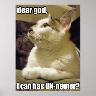 LOLcat - un cher dieu Poster