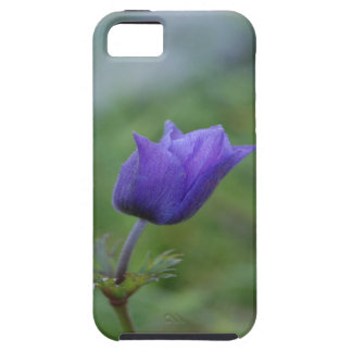Lone Blue-Purple Anemone Case For The iPhone 5