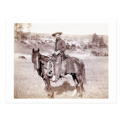 Lone Cowboy Post Cards