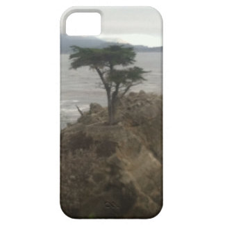 Lone Cypress iPhone 5 Case