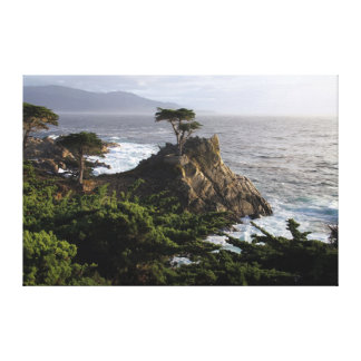 Lone Cypress - stretched canvas print