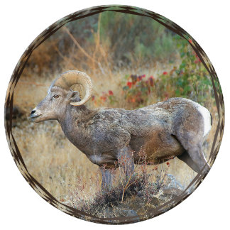 Lone Ewe Plate