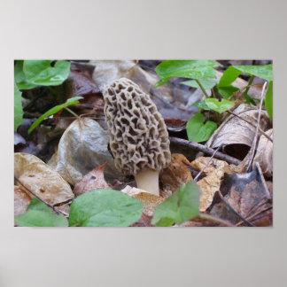Lone Grey Morel Mushroom Poster