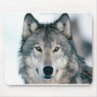 Lone grey wolf mousepad