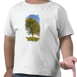 Lone maple tree in hay field at Raymond Farm, T Shirt
