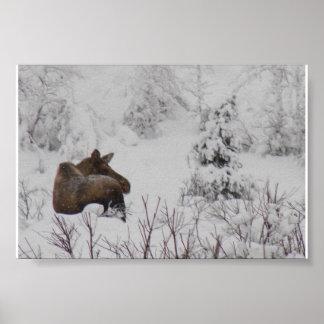 Lone Moose - Logan Guinn Poster