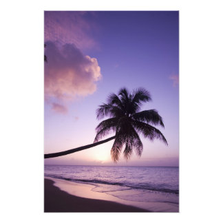 Lone palm tree at sunset, Coconut Grove beach Photo Print