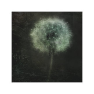 Lone Pretty Dandelion Canvas Print