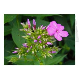 Lone Purple Phlox Bloom Card