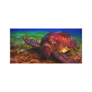 Lone Sea Turtle Stretched Canvas Print
