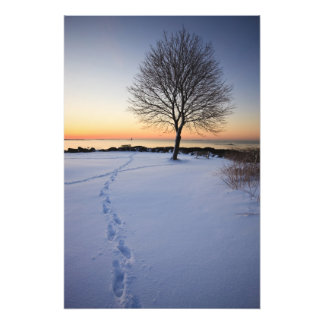 Lone tree in fresh snow at New Castle Common Photo Art