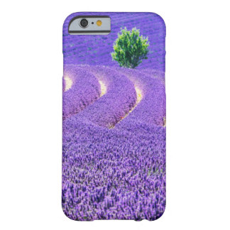 Lone tree in Lavender Field, France Barely There iPhone 6 Case