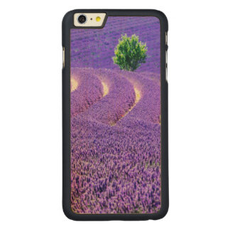 Lone tree in Lavender Field, France Carved® Maple iPhone 6 Plus Case