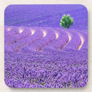 Lone tree in Lavender Field, France Drink Coasters