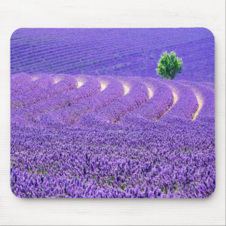 Lone tree in Lavender Field, France Mouse Pad