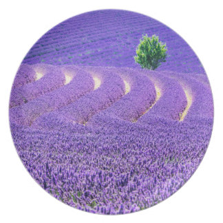 Lone tree in Lavender Field, France Party Plate