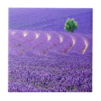 Lone tree in Lavender Field, France Tiles