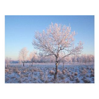 Lone Tree Light Frost Postcard