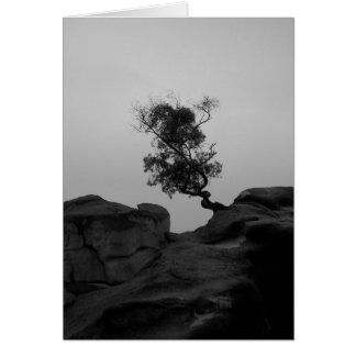 Lone Tree Note Card