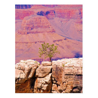 """Lone Tree on Canyon Ridge"" collection Postcard"