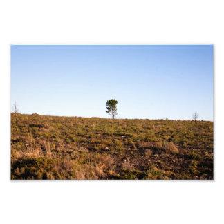 Lone Tree Photo Print