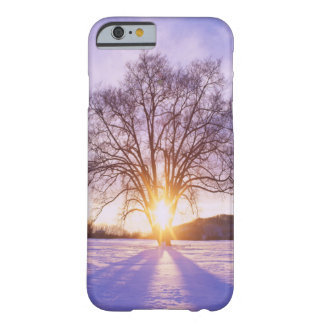 Lone Winter Tree in the Sunrise Barely There iPhone 6 Case