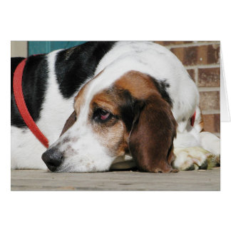 Lonely Basset Hound card