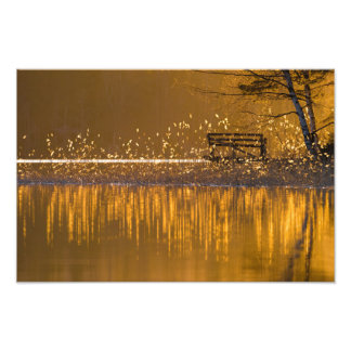 Lonely bench by the lake in the golden light photo print