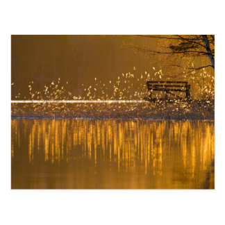 Lonely bench by the lake in the golden light postcard