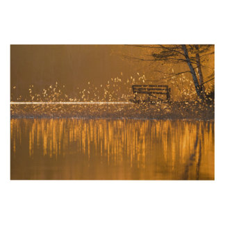 Lonely bench by the lake in the golden light wood wall art